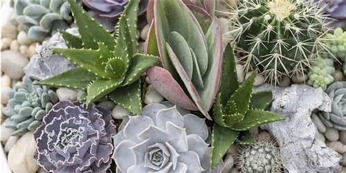Panther Creek Cellars Succulent Making Party