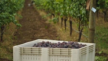 Panther Creek Cellars in Tri-City Herald Article