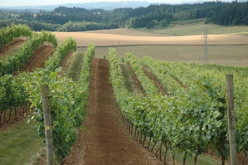 "Panther Creek Featured in ""Oregon's Pinot Noir Legacy"" 